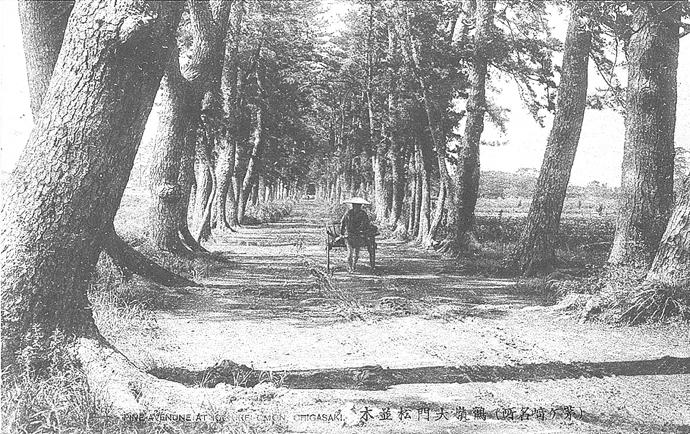 鶴嶺八幡宮参道《市史跡》と 松並木《市天然記念物》(1969年指定)