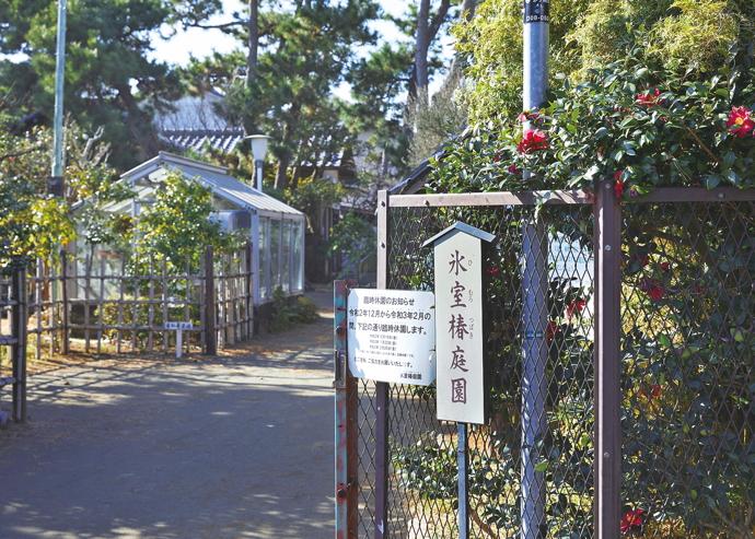 氷室椿庭園(ひむろつばきていえん)